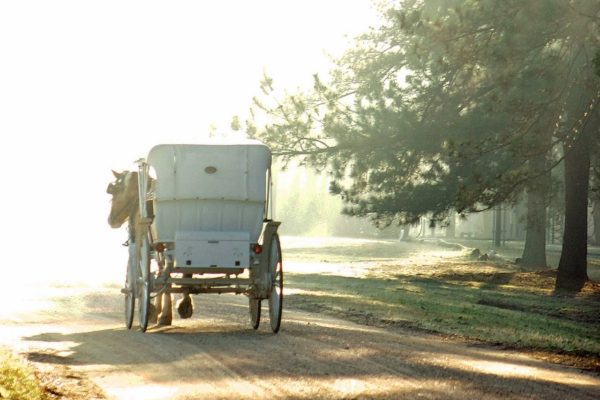 Horsedrawn carriage ride to breakfast at Hilltop Restaurant and Herb Garden